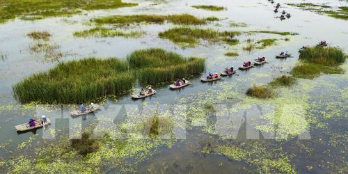 Chiêm ngưỡng khung cảnh mùa chim di trú trên đầm Vân Long