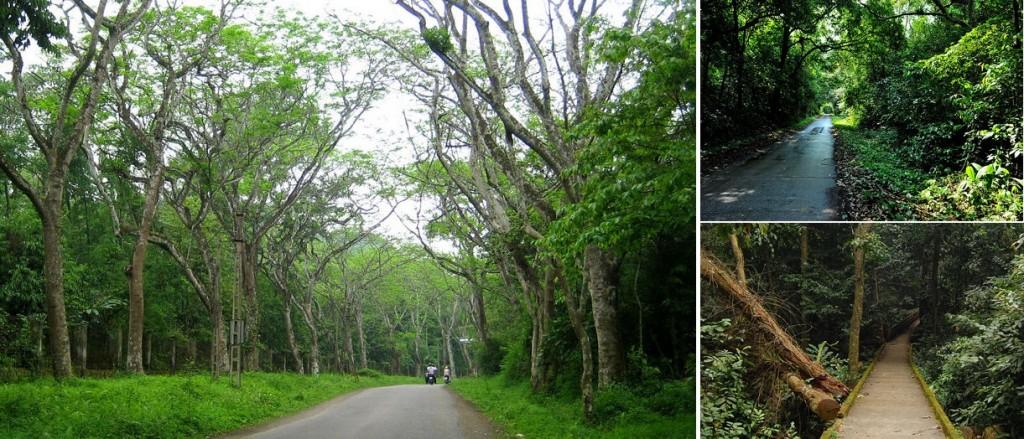 cảnh rừng Cúc Phương