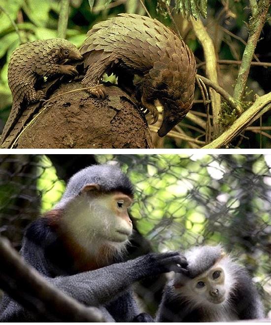 động vật rừng Cúc Phương